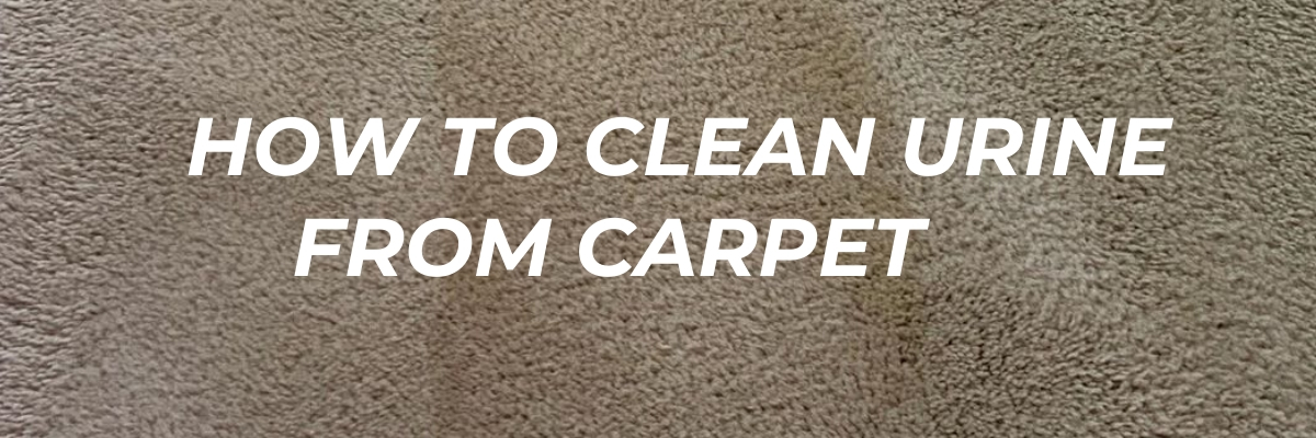 How to Clean Urine on Carpet